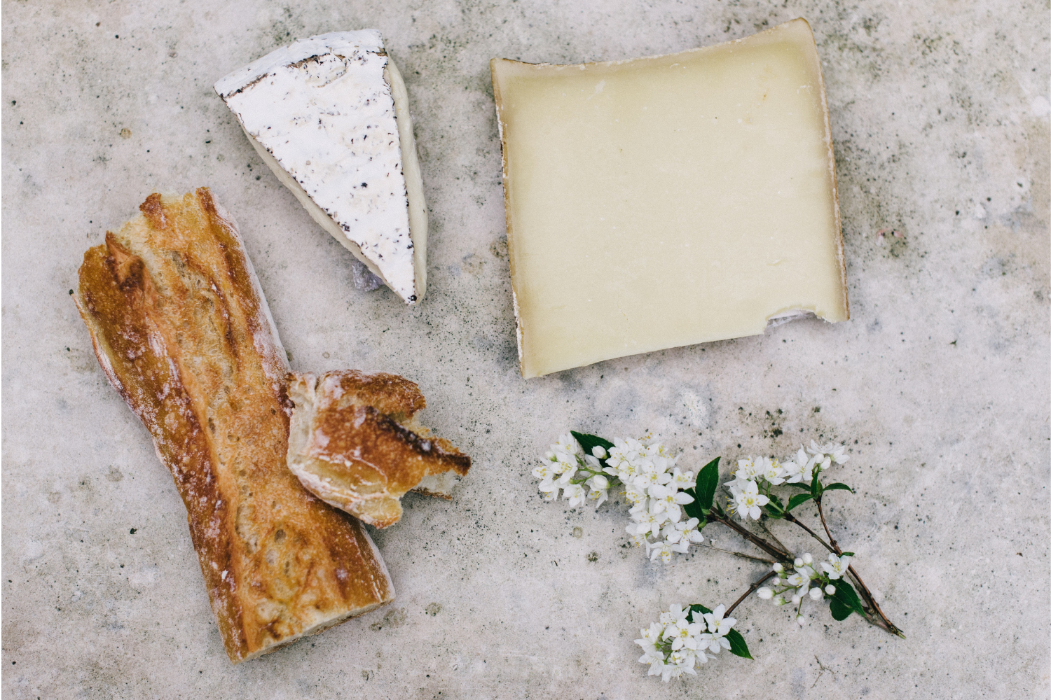 Selection of different cheeses with flowers, what you need to know about calcium
