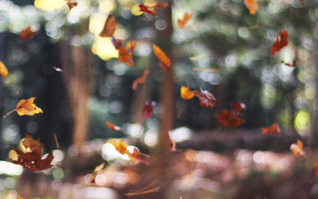 Favourite Healthy Autumn Recipes